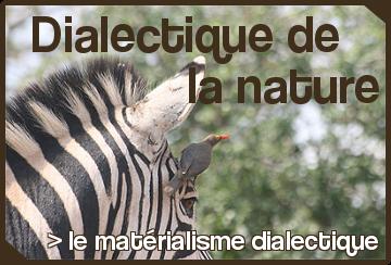 genetique_reactionnaire-1.png