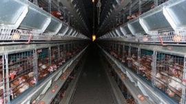 accumulation_du_capital_selon_marx_le_fermier_capitaliste_2.jpg