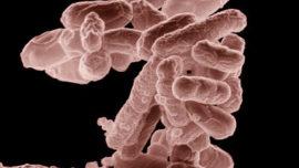 escherichia-coli.jpg