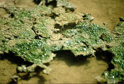 les_bacteries-_une_entite_mondiale-4.jpg