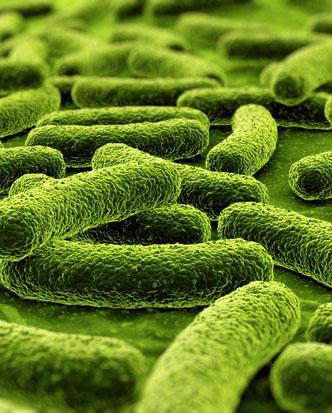 les_bacteries-une_entite_mondiale-3.jpg