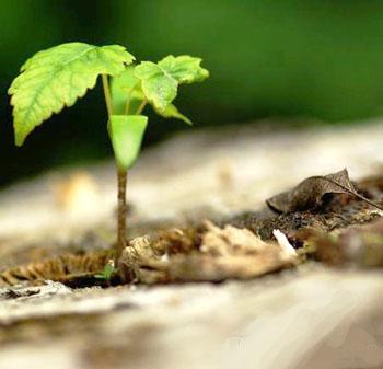 arbre-pousse.jpg