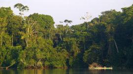 L'Amazonie, sanctuaire mondial